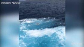 Lo scontro tra battello e traghetto sembra inevitabile: donna si tuffa per lo spavento