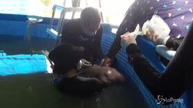 Cucciolo di dugongo muore in Thailandia: ha lo stomaco pieno di plastica