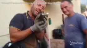 Vigile del fuoco salva un gattino e scoppia in lacrime: la reazione diventa virale